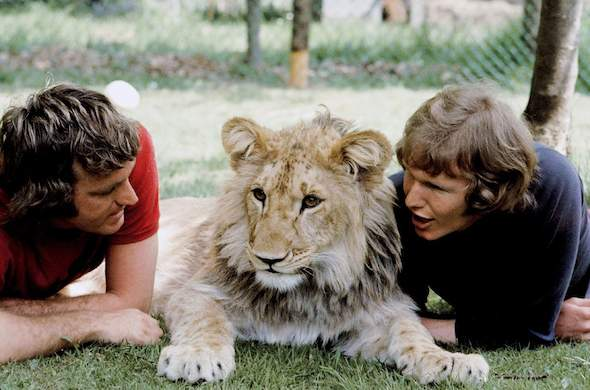 Christian the Lion and his owners.