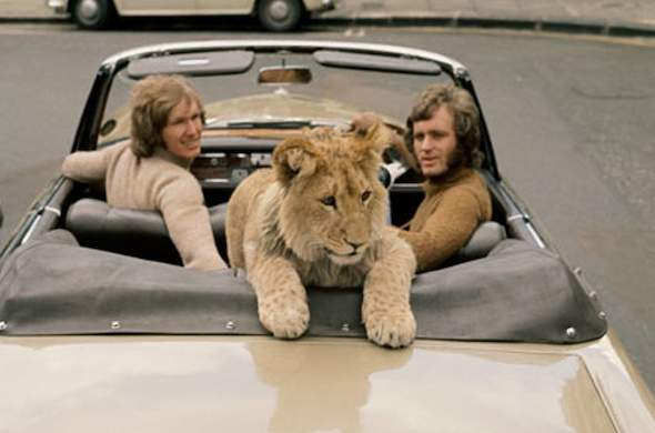 Christian the Lion in a car in London.