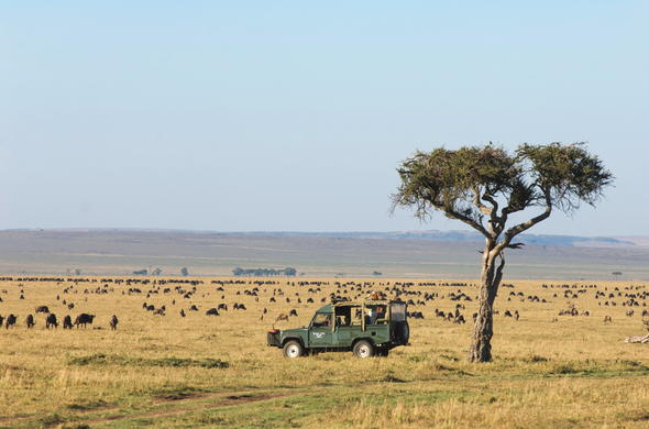 Classic Kenya Safari game drive in Masai Mara.