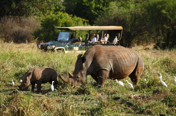 See Elephants on  game drive in Meru National Park.