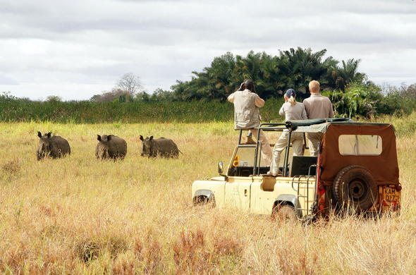 Rhino sighting during a thrilling game drive in Kenya.