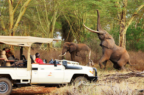 Game drive in Tsavo West National Park.