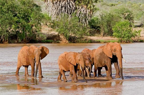 Tsavo East Elephants.