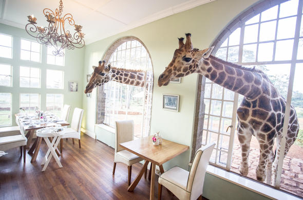 Breakfast room at Giraffe Manor.