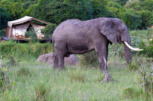 Observe the wandering elephant from Karen Blixen Camp.