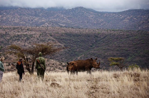 Lewa Wildlife Conservancy Rhino.