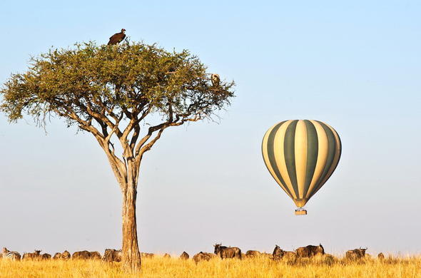 Hot Air Balloon safari over the Masai Mara.