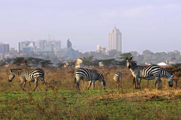 Nairobi National Park - on the city limits.
