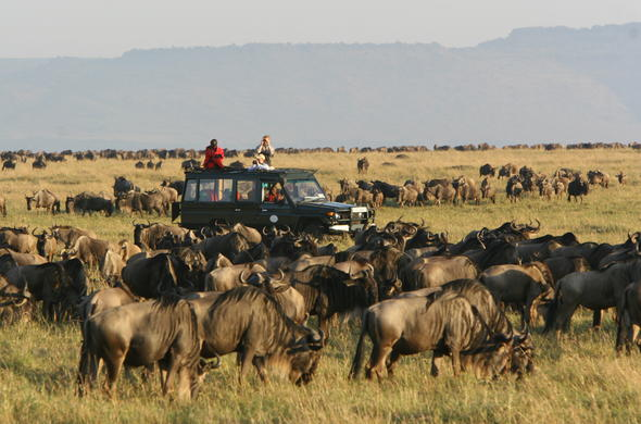 Witness the Great Migration at Rekero Camp in Kenya.