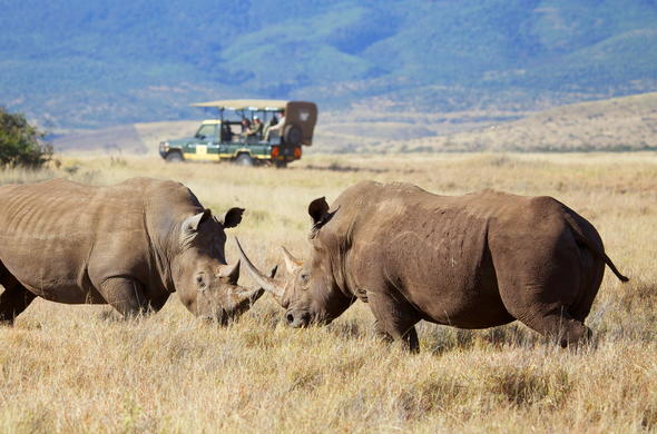 See Rhino on a game drive in Lewa Wildlife Conservancy.