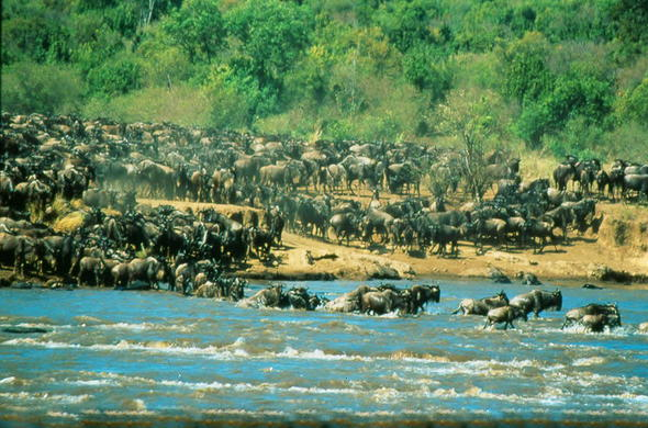 See the great Migration on an East African safari.