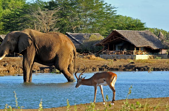 Watch as wildlife flock to the waterhole at Satao Camp.