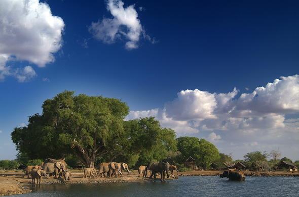 Herds of elephant to be seen at the waterhole.