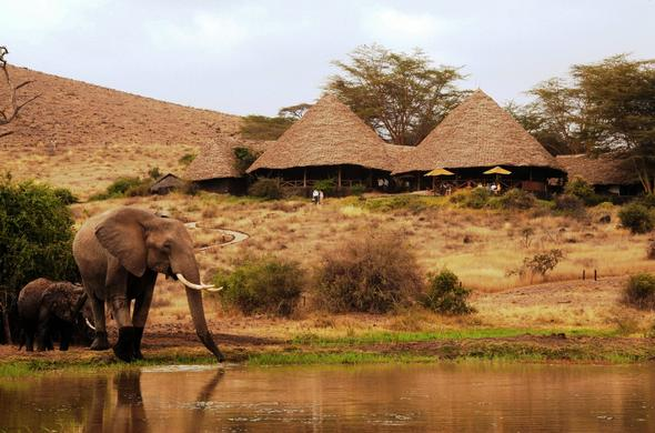 Amboseli Elephant drinking from the Tortilis Camp waterhole.