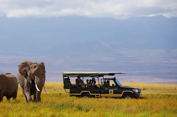 Elephant spotted in Amboseli National Park.