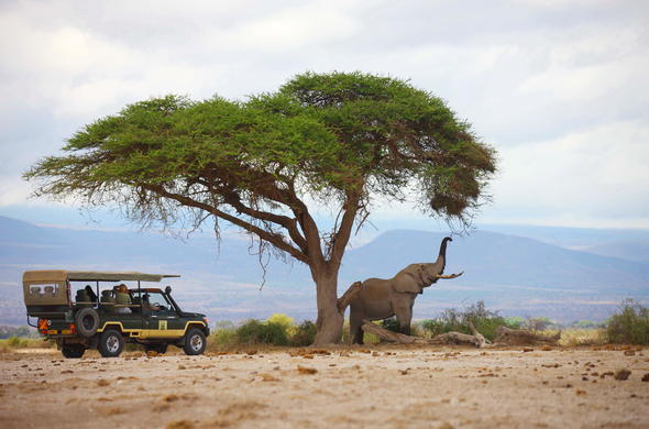 Elephant sighting during a game drive in Amboseli National Park.