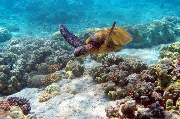 Watamu National Marine Park sea life.